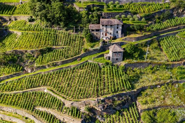 agricoltura-montagna-Valtellina